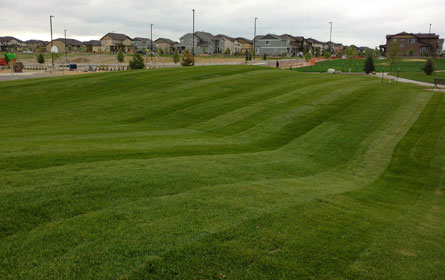 Turf Grass Supplier Fort Collins Colorado