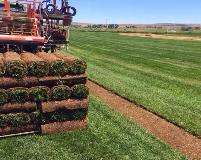 Sod Installation Bountiful